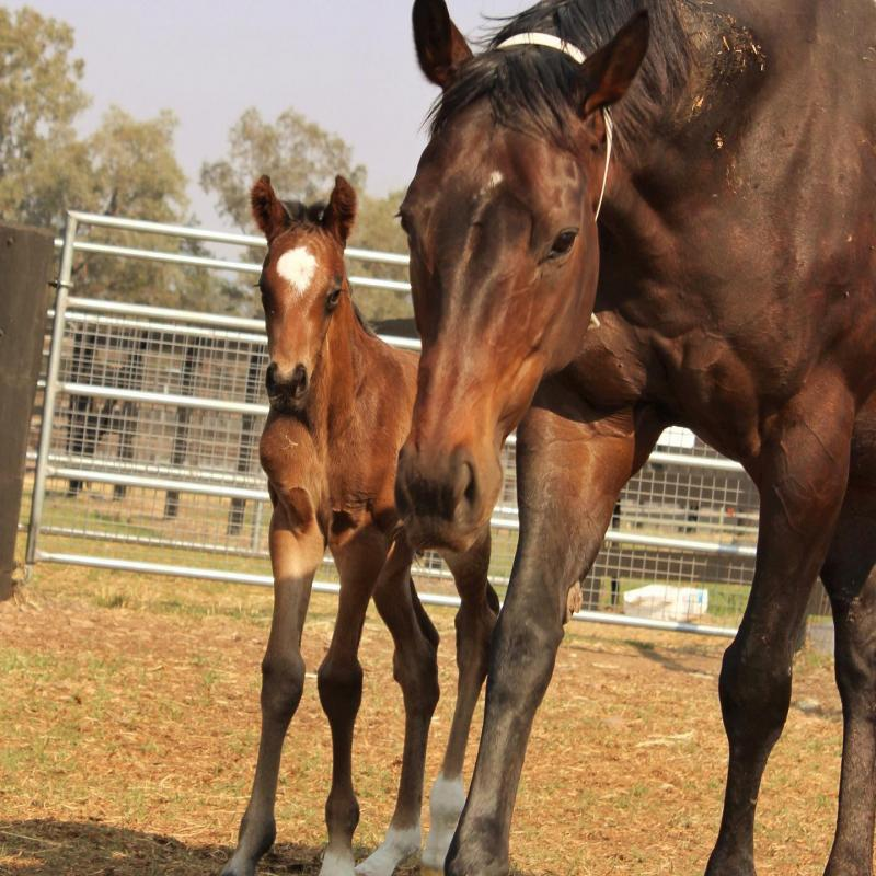 Colt by Gold Standard out of Porto Cristo